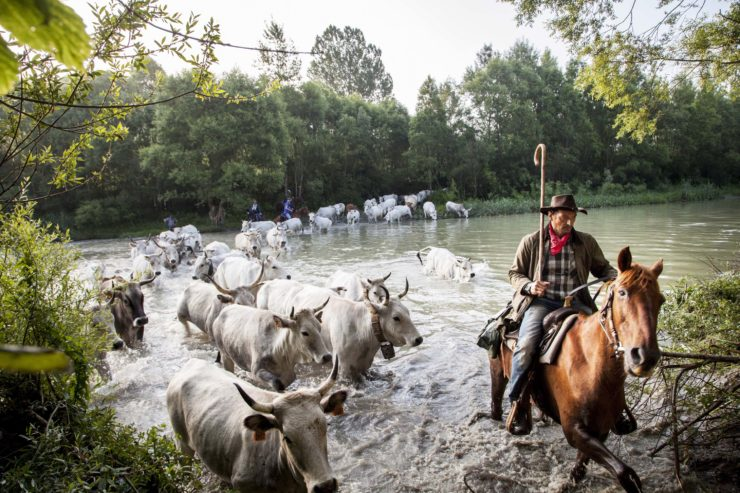 The Transhumance 13