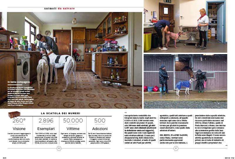 Greyhounds | Lasciateci vivere da cani 3