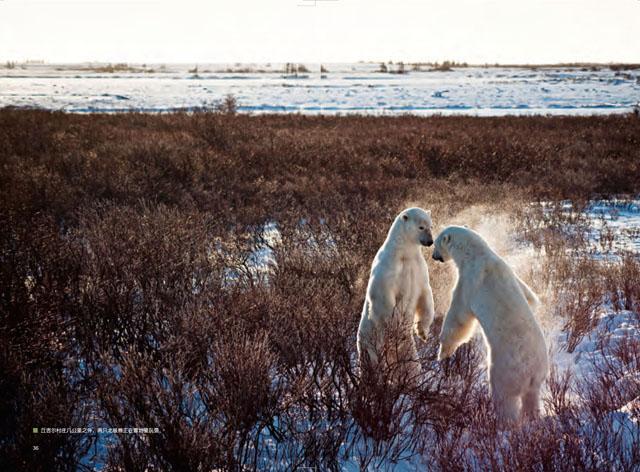Churchill Town in Canada. World's Polar Bear Capital 3